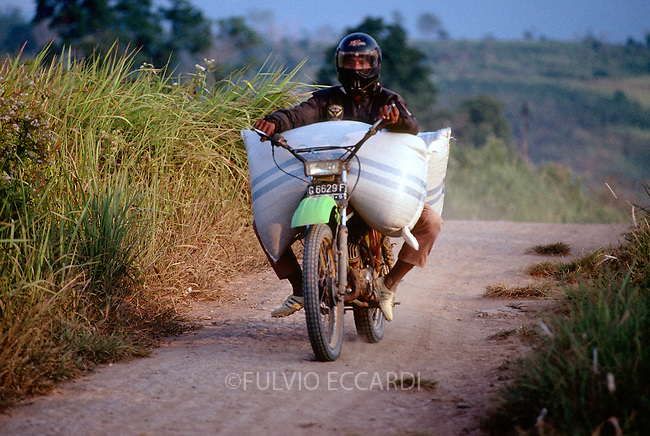Indonesia, Desa Gincing, Kasui, North Lampung, coffee, coffea, worker, men, transport, sack, bag, motorcycle