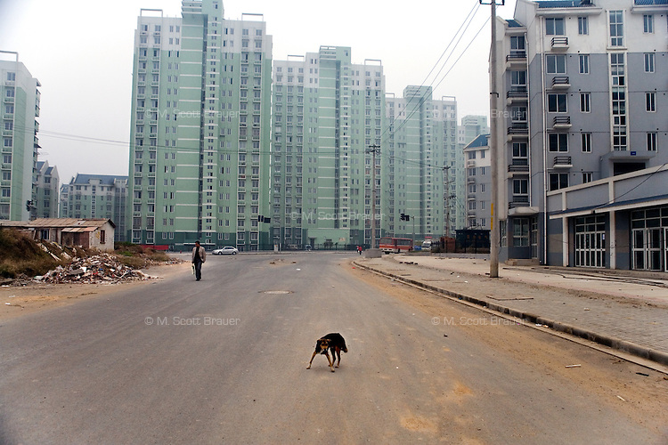A dog stands in the middle of new construction in the northern outskirts of Nanjing China.