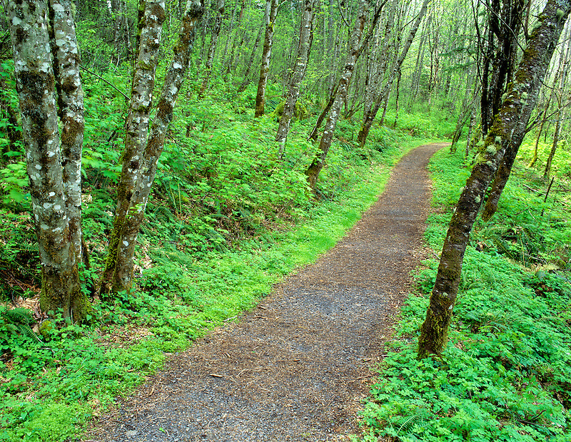 Path with spring growth. Columbia River Gorge Scenic Area, Oregon.