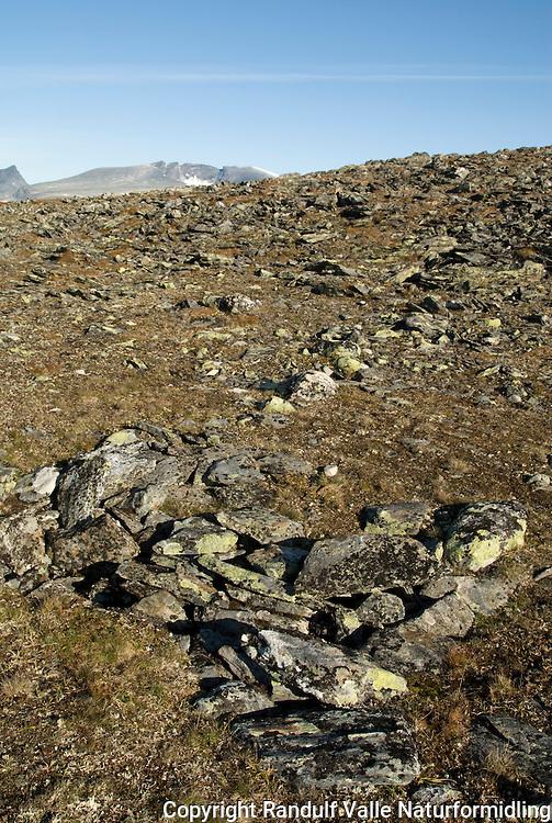 Dyregraver i Enøvlingshøi i Dovrefjell---- Old caribou traps