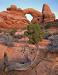 Arches National Park, UT<br /> Turret arch rises above the slickrock desert
