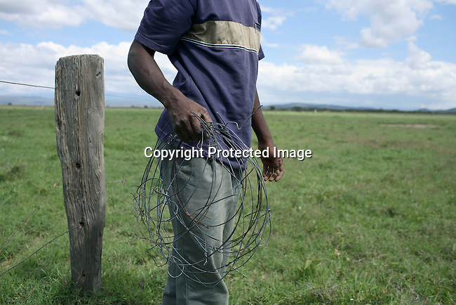 Stephen Muchore, a security supervisor Soysambu farm in Kenya, shows a snare that poachers has put at the farm. Photo; Per-Anders Pettersson/ Getty Images
