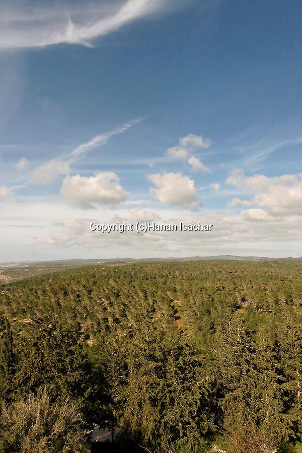 Israel, Mount Carmel. Ofer forest