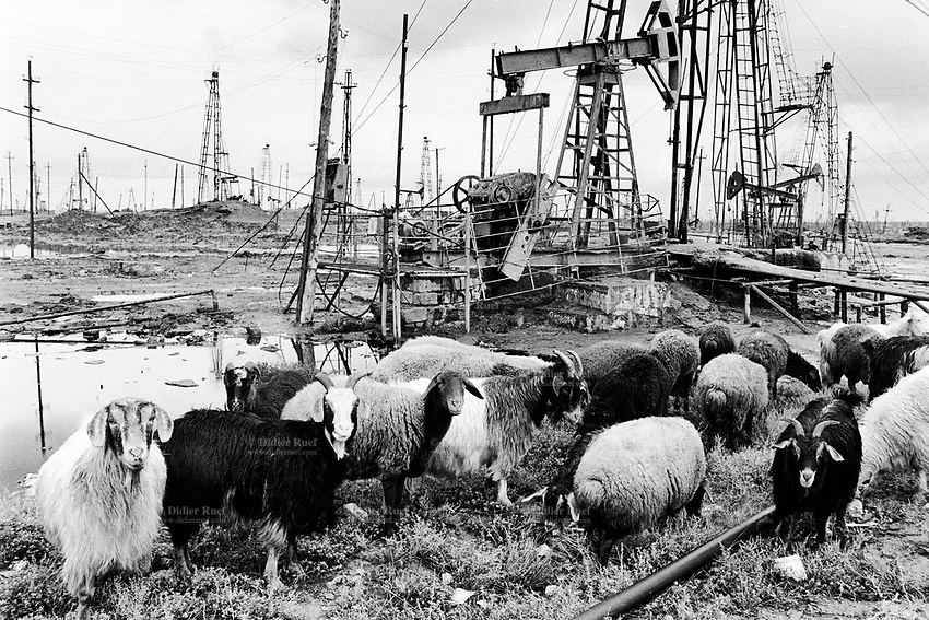 Azerbaijan. Baku Region. Baku. A flock of sheeps. State Oil Company of Azerbaijan Republic (SOCAR) is the project owner of the oil fields in Balakhani. Oil-extracting infrastructure. Wells heads and nodding donkeys. Drilling derricks and rigs. Spill and oil leakage from installation in operation. Oil production. Ecological disaster. Balakhani Oil Fields are a source of pollution as a result of well water and oil spill discharge. © 2007 Didier Ruef