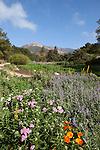 Santa Barbara Botanic Garden, Santa Barbara, California, CA, USA