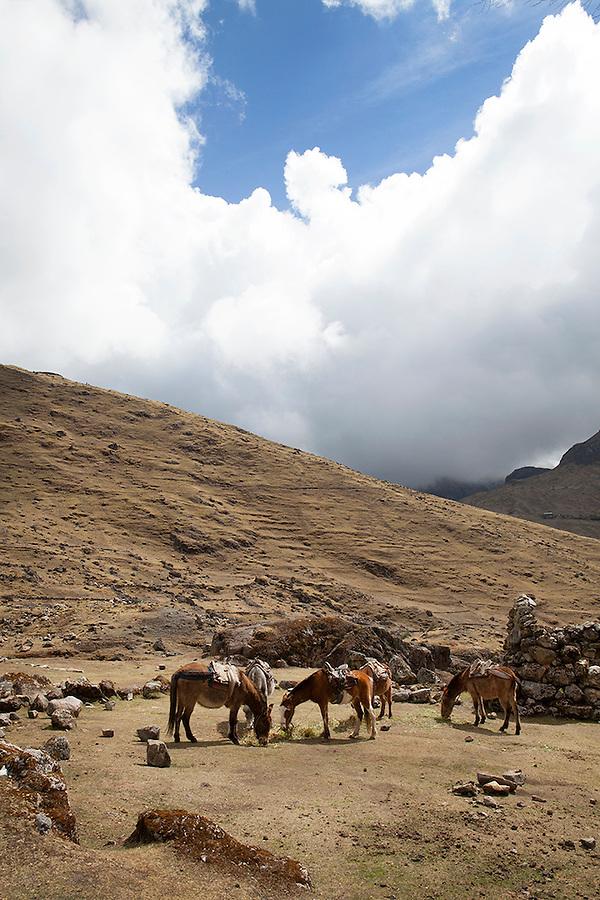 Horses near Lares, Peru