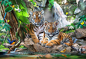 Howard, REALISTIC ANIMALS, REALISTISCHE TIERE, ANIMALES REALISTICOS, paintings,+tigers,djungle,++++,GBHR889,#A# ,puzzles