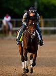 LOUISVILLE, KENTUCKY - MAY 01: Omaha Beach with Tyler Cambra up prepares for the Kentucky Derby at Churchill Downs in Louisville, Kentucky on May 01, 2019. Evers/Eclipse Sportswire/CSM