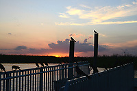 Early evening finds blackbirds perched on a dock railing  watching the sunset. Photographed at Arthur Marshall Loxahatchee  Wildlife Refuge.