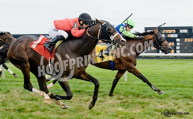 Dramedy winning at Delaware Park on 8/30/14