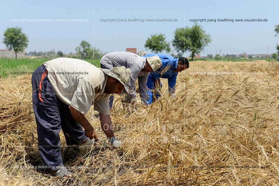 EGYPT, governate Beheira, farming in the Nile delta , harvest of wheat / AEGYPTEN, Beheira, Landwirtschaft im Nildelta, Ernte von Weizen