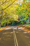 Country road with autumn leaves on trees in Mt Wilson, NSW, Australia