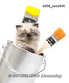 Xavier, ANIMALS, REALISTISCHE TIERE, ANIMALES REALISTICOS, cats, photos+++++,SPCHCATS808,#a#