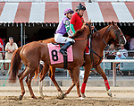 Mighty Scarlett (no. 8) wins the Race 9, Sep. 2, 2018 at the Saratoga Race Course, Saratoga Springs, NY.  Ridden by Jose Ortiz, and trained by Chad Brown, Mighty Scarlett finished 1 3/4 lengths in front of Too Cool to Dance (No. 3).   (Bruce Dudek/Eclipse Sportswire)
