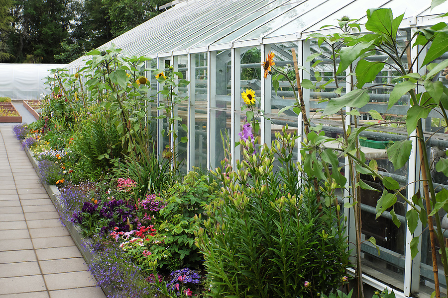 Exterior view of blooming flowers and greenhouse, Akureyri Botanical Garden, North Iceland, Iceland