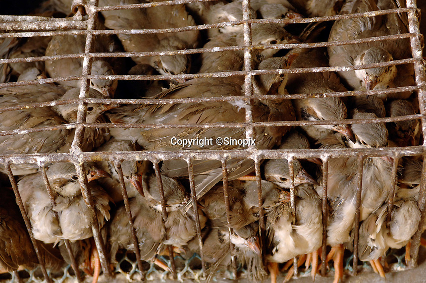 """Cages of quails at a bird and poultry marker in Guangzhou, China.in this file photo. China's wild animal markets, where live wild animals and reared animals are sold are the source of many viruses that mutate as they """"jump"""" from animals to humans. The coronavirus COVID-19 is thought to have originated in an animal market in China. <br /> By Sinopix Photo Agency"""