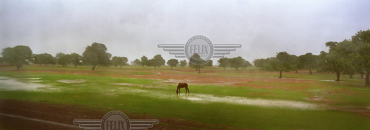 As the rainy season begins, a horse grazes on the transforming land....