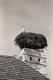 AUSTRIA, Rust, a stork nests in a rooftop chimney in the center of town, Burgenland (B&W)