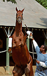 Funny Cide at Saratoga, August 2003.   © 8/03 Barbara D. Livingston. All rights reserved. easygoer78@aol.com