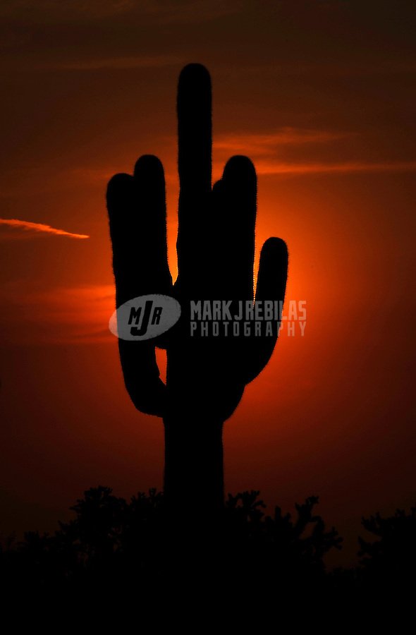Desert cactus saguaro Arizona nature sky sunset dusk silhouette