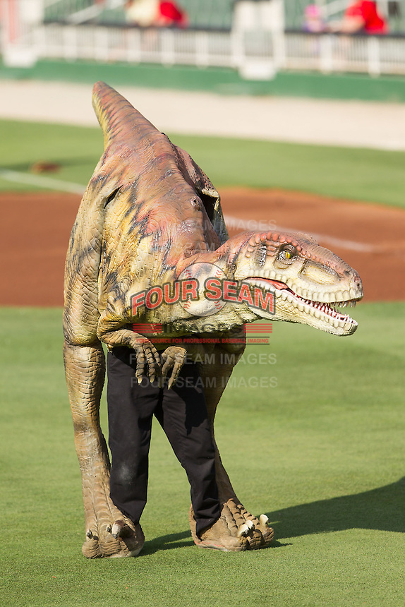 Dakota and the Dinosaur Response Team were on hand to throw out a ceremonial first pitch prior to the South Atlantic League game between the Hagerstown Suns and the Kannapolis Intimidators at CMC-Northeast Stadium on June 1, 2014 in Kannapolis, North Carolina.  The Suns defeated the Intimidators 11-5 in game two of a double-header.  (Brian Westerholt/Four Seam Images)