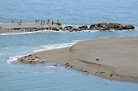 Seals and their newly-born pups on a sandbank at the estuary of the Russian River, at Jenner, Sonoma County, California, USA. Spectators look on from from a jetty opposite. 201304292055<br /> <br /> Copyright Image from Victor Patterson, 54 Dorchester Park, Belfast, UK, BT9 6RJ<br /> <br /> Tel: +44 28 9066 1296<br /> Mob: +44 7802 353836<br /> Voicemail +44 20 8816 7153<br /> Skype: victorpattersonbelfast<br /> Email: victorpatterson@me.com<br /> Email: victorpatterson@ireland.com (back-up)<br /> <br /> IMPORTANT: If you wish to use this image or any other of my images please go to www.victorpatterson.com and click on the Terms &amp; Conditions. Then contact me by email or phone with the reference number(s) of the image(s) concerned.
