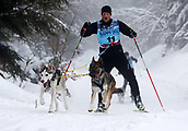 2nd February 2019, Thuringia, Frauenwald, Germany; Sled dog handler Frank Brehm and his team are on their way during a sled dog race. 120 mushers from five nations with their huskies, samoyeds, malamutes or Greenland dogs started.