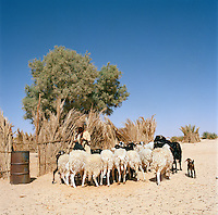 Local Tuareg girl with a herd of goats near Tasawah, Libya