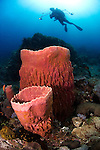Barrel sponges and diver silhouette, Xestospongia sp., Anilao, Batangas, Luzon, Philippines, Pacific Ocean