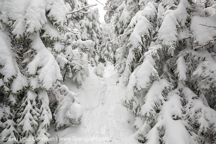 Snow-covered forest along the Appalachian Trail (Kinsman Ridge Trail) in Kinsman Notch of the White Mountains, New Hampshire USA