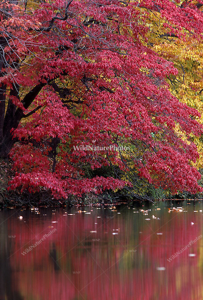 Fall Color, Reflections on Water; Ohio
