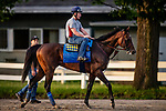 JUNE 06: Mckinzie walks through the barns at Belmont Park in Elmont, New York on June 06, 2019. Evers/Eclipse Sportswire/CSM