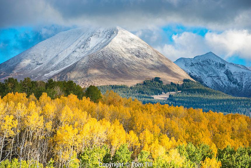 La Sal Mountains and fall aspen. Manti-La Sal National Forest, Utah, Near Moab, Utah ,Mt. Mellinthin, Populus tremuloides