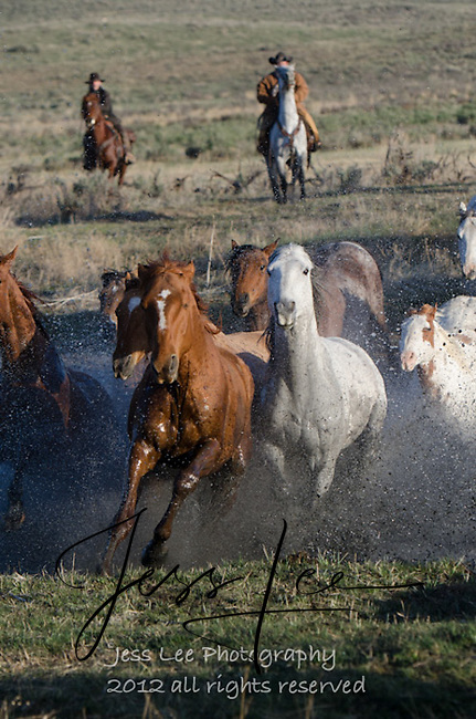 cowboy ranch horse roundup Cowboys working and playing. Cowboy Cowboy Photo Cowboy, Cowboy and Cowgirl photographs of western ranches working with horses and cattle by western cowboy photographer Jess Lee. Photographing ranches big and small in Wyoming,Montana,Idaho,Oregon,Colorado,Nevada,Arizona,Utah,New Mexico.