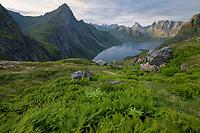 Green summer landscape above Forsfjord, Moskenesøy, Lofoten Islands, Norway