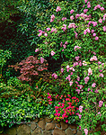 Azalea, Japanese Maple, Wisteria, Cypress Avenue Garden, Mill Valley, California
