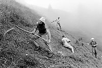 Switzerland. Canton Nidwald. Oberalp. 1500 meters high. Engelberg valley. Hay harvest. Two men are using a  scythe, while a girl and another man use rakes. Manual labor. Labour force. Swiss alpine farmers. Alps mountains peasants. © 1996 Didier Ruef
