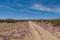 Dirt road and spring flowers in Baja California