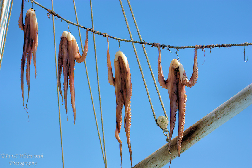 Fishermen display their catch of octopus hanging for the tourists in Mykonos in Greece