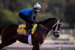 OCT 29: Breeders' Cup Classic entrant Seeking the Soul, trained by Dallas Stewart,  gallops at Santa Anita Park in Arcadia, California on Oct 29, 2019. Evers/Eclipse Sportswire/Breeders' Cup