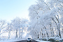 A motorist passes snow covered trees near Dundrod, County Antrim, Northern Ireland, Thursday Jan 29th, 2015. A 130 schools where forced to close due to the weather along with bus services. Photo/Paul McErlane