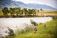 Anglers hike along the Madison River during the salmonfly hatch near McAtee Bridge.