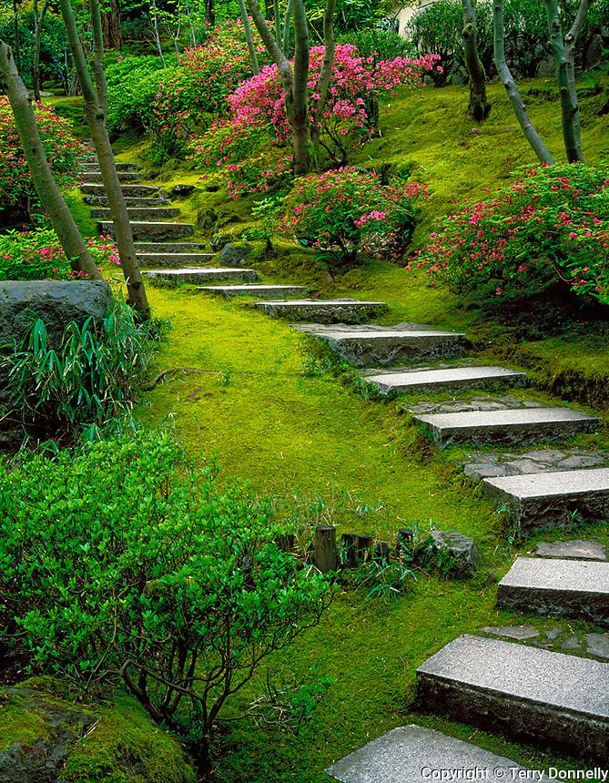 Portland, ORu003cbr /u003e Stone Steps And Flowering Azaleas On The Mossy Hillside