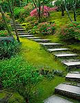 Portland, OR<br /> Stone steps and flowering azaleas on the mossy hillside of The Natural Garden,  The Japanese Garden, Washingotn Park