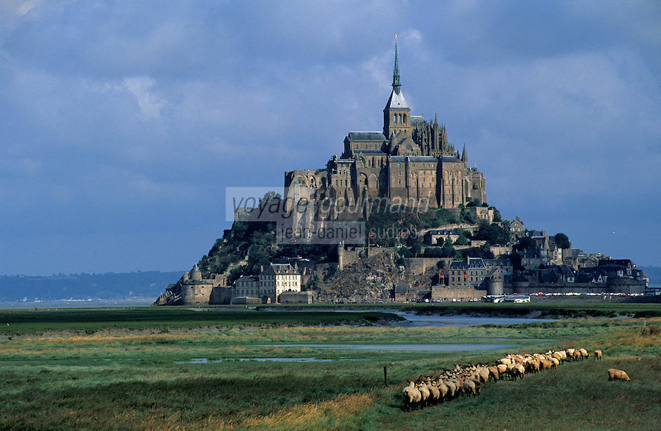 Europe/France/Normandie/Basse-Normandie/50/Manche: Moutons et pré salé devant le Mont Saint-Michel