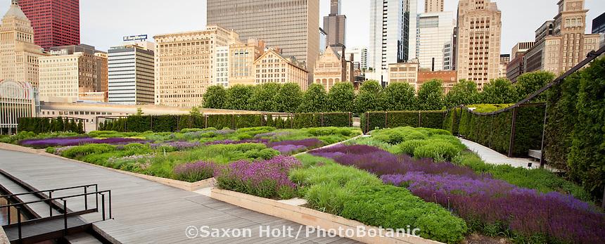 holt_1032_011.CR2 | PhotoBotanic Stock Photography Garden Liry