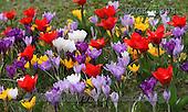 Gisela, FLOWERS, BLUMEN, FLORES, photos+++++,DTGK1994,#f#