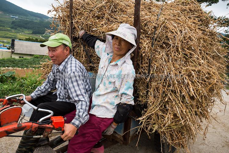 9/11/13 -- Cheongsando Island, Jeonnam Province (Jeollanam-do), South Korea<br /> <br /> Farmers return from their fields on a cultivator on Cheongsando Island<br /> <br /> Photograph by Stuart Isett<br /> &copy;2013 Stuart Isett. All rights reserved.