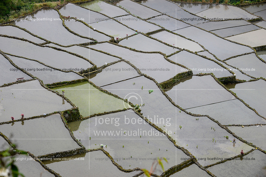 PHILIPPINES, Mountain Province, Cordilleras, rice farming on rice terrace in mountains near Bayyo / PHILIPPINEN, Mountain Province, Cordilleras, Reisanbau und Reisfelder in Terrassen in den Bergen bei Bayyo