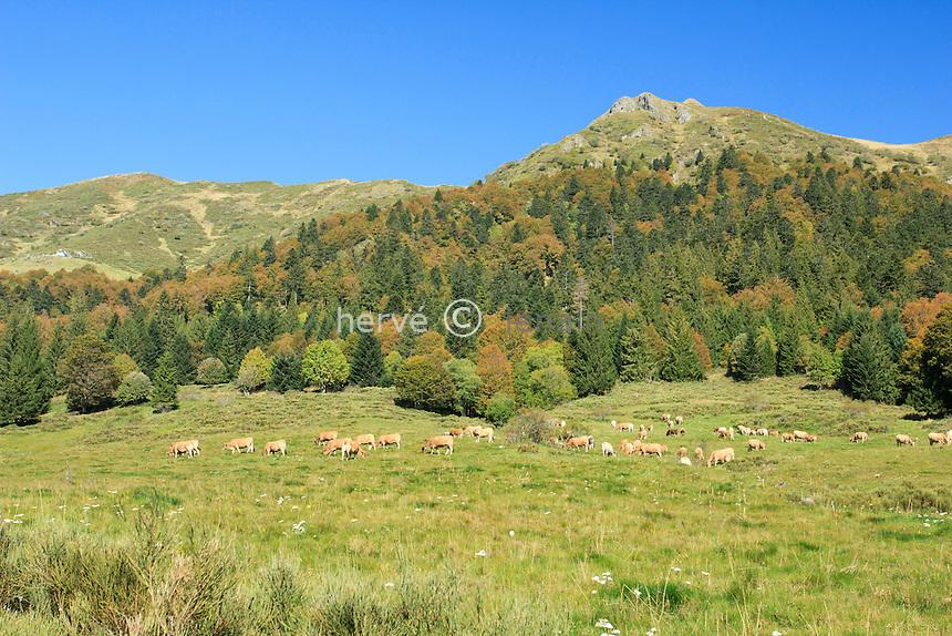 France, Cantal (15), Monts du Cantal, Le Lioran, le Font d'Alagnon en automne // France, Cantal, Monts of Cantal, Le Lioran, the Font d'Alagnon in autumn